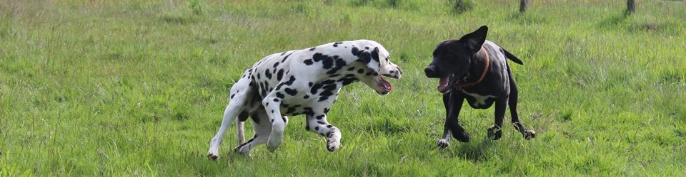 Snüffelsnuut – Hundeerziehung – Alessandra Seifert
